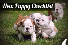 Do you have a new puppy? See our checklist --> http://go.homesalive.ca/dog-cat-learning-centre/bid/313612/New-Puppy-Checklist