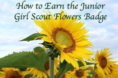 How to earn the Junior Girl Scout Flowers badge
