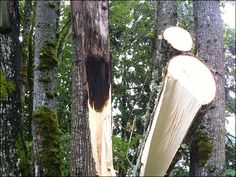 tree lightning strike - Google-Suche - https://www.google.pl/