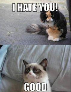 Ideas For Humor Espaol Grumpy Cat espaol Ideas For Humor E. - - Ideas For Humor Espaol Grumpy Cat espaol Ideas For Humor E… Humor Ideen für Humor Espaol Grumpy Cat espaol Ideen für Humor E … – – Gato Grumpy, Funny Grumpy Cat Memes, Grumpy Kitty, Funny Memes, Funniest Memes, Funny Minion, Funny Videos, Animal Jokes, Funny Animals