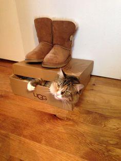 Ugg Kitty