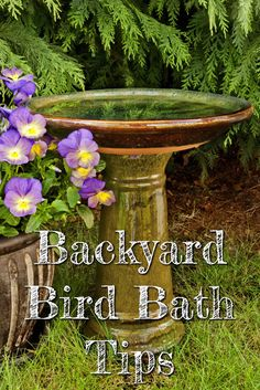 What is the best bird bath for attracting birds to your yard? What type of water do birds need? Let's talk about all that in our Backyard Bird Bath Tips below.