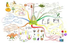 Create your own Mind Maps -Reproduction in Plants Mind Maps