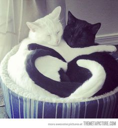 No, *I'm* positive and *you're* negative. -- black and white cats