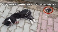 Justice for defenseless cat ripped into pieces and left to DIE in agony!