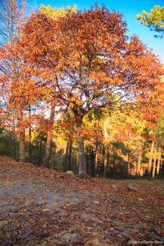 Otoño Autumn