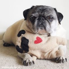 Social #pug Profile | Tuesday http://www.thepugdiary.com/social-pug-profile-tuesday/