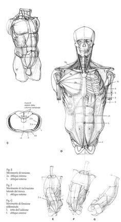 Illustration by Alberto Lolli, from Struttura Uomo