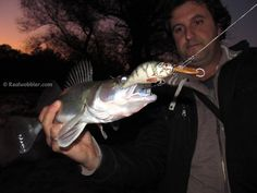 2015, November. Yesterday's afternoon catch - another walleye got caught on a Realwobbler Fat S Lure with perch skin. http://www.realwobbler.com/en/38-fat-lures-s-size  #fishing #walleye #angling #lures #customlures #handmadelure #woodenlures #crankbaits #lurefishing #pikeperch #zander #angeln #köder #kunstköder #spinnfischen #pesca #lucioperca #señuelos #pescadeportiva #риболов   #воблер #елеврек #сулка #рибалка #рыбалка