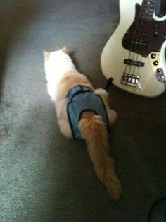 Cokie the Cat: Hollywood Insider. My boy and his manpants with his dad's Fender bass. www.cokiethecat.com