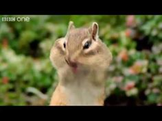 Funny Animal Voiceovers @courtcino