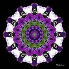 Mandala ''Stiefmütterchen weiss''   Kreatives by Petra #mandala #foto #fotographie #naturfotografie #macro #photo #natur #nature #sommer #summer #belvedere #botanischergarten #wien #vienna #blumen #flowers #violett #weiss #stiefmütterchen #pansy Petra, Photoshop, Canon, Mandalas, Photos, Nature Photography, Mosaics, Canvas, Floral