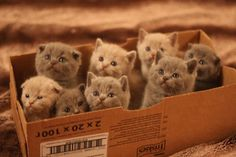 Cat food order went wrong 8 kittens sent