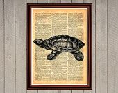 Turtle animal nature shell print Rustic decor Cabin Vintage Retro poster Dictionary page Home interior Wall 0012