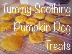 Got a pup with an upset tummy? Try these homemade tummy soothing pumpkin dog treats, click the photo for the recipe and a review! #DogTreats #Dogs #HomemadeTreats
