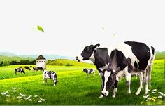 Cartoon Grass, Milk Packaging, Packaging Design, Cow Png, Image Clipart, Dairy Cattle, Girly Drawings, Illustrations And Posters, Animal Rights
