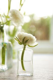 Single bloom centerpieces  #white #wedding #decor