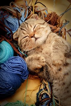 This cat is in yarn heaven!