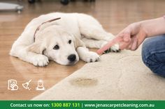 Jena's Carpet Cleaning is the best professional Carpet Cleaning Company in Melbourne. Visit http://jenascarpetcleaning.com.au/
