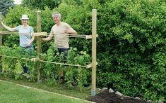 Klettergerüst Für Rosen Selber Bauen : Rankhilfe für himbeeren selber bauen kvety garten