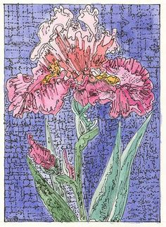 Pink Iris ACEO Signed Limited Edition Print  by THEODORADESIGNS, $7.00 #pcfteam