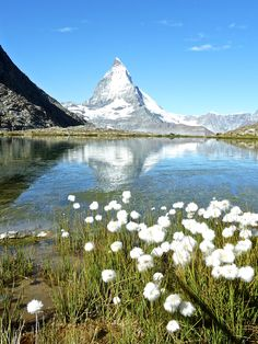 view of Matterhorn with my favourite high alpine flowers (wish I knew the name of the flowers)