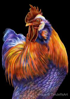 Rooster Colored Pencil Drawing