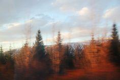#trip #iceland #trees