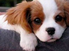 These puppies are trying to melt your heart (45 photos)