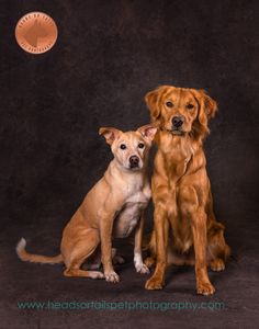 Pet photography featuring golden retriever and basenji mix. Basenji Dogs, Pet Photography, Photo Quotes, Dog Photos, Pets, Animals, Quote Pictures, Puppy Pictures, Animals And Pets
