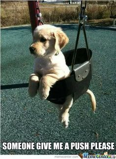 Puppy Meme Cute Funny Animals Funny Animal Pictures Funny Dogs Cute Dogs