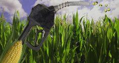 La gran polémica de los biocombustibles y el dióxido de carbono - http://www.renovablesverdes.com/la-gran-polemica-los-biocombustibles-dioxido-carbono/