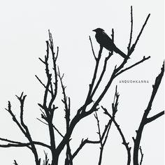 Anouchkanna  Black and white Black bird