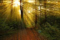 Raios, Floresta, Natureza, Paisagem, Luz