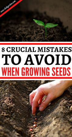 8 Crucial Mistakes To Avoid When growing Seeds. In today's article, we take a look at 8 of the biggest and most common mistakes made when growing from seed indoors. And more importantly, how to avoid them for great plants!