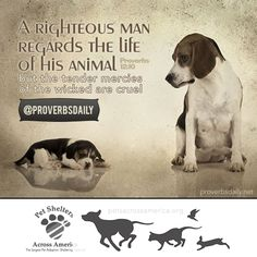Proverbs A righteous man regardeth the life of his beast: but the tender mercies of the wicked are cruel. Proverbs 12 10, Bible Proverbs, Animals In The Bible, Abuse Quotes, Stop Animal Cruelty, Human Soul, Daily Bible, Pet Names, Shelter Dogs
