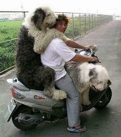 lotta doggies