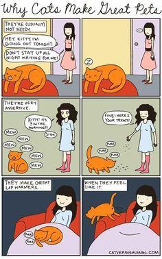 I hate cats... Yasmine's Cat vs Human: Why Cats Make Great Pets
