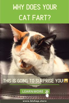 Do cats fart? You're definitely not the only parent who had this question in his head. and if felines do fart, are feline farts ordinary/normal? and for what reason do felines fart? I'd like to ensure you that you're lucky because today we'll be clearing the dust off of any confusion regarding the matter of cat fart. #cats #cute #healthycat #embarassed Fun Facts About Cats, Cat Facts, Confusion, Parenting, Cute, Kawaii, Childcare, Natural Parenting
