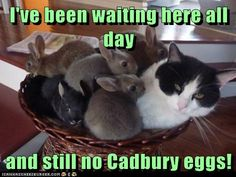 Cadbury Easter bunny ( cat )