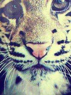 close up baby tiger