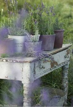 My neighbor Mrs. Callaway, just gave me loads of lavender, the fragrance is lovely.......
