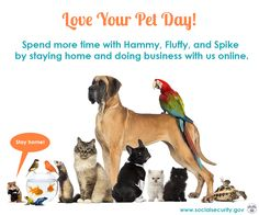 #LoveYourPetDay Spend some extra time today with your little furry, feathery, or scaly friend www.socialsecurity.gov/onlineservices