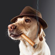 Image result for smoking animals