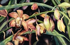 """""""One At A Time"""", original orchid flower watercolor painting by Hawaii artist Colleen Sanchez. This gorgeous flower painting is framed and ready to hang. Seascape Paintings, Watercolor Paintings, Watercolors, Watercolor Background, Watercolor Flowers, Original Art, Original Paintings, Planting Flowers, Flowering Plants"""