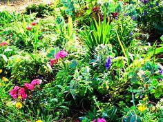Drought resistant gardening