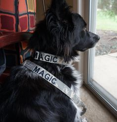 Another Satisfied Customer!!!!  Welcome Magic to our dog collar gallery! only at www.armynavywisconsin.com!