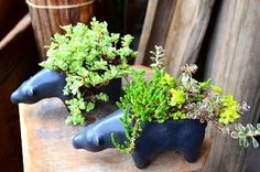 多肉植物 寄せ植え Kitowa