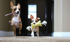 10 Ways to Praise Our Dogs Without Food @boingydog