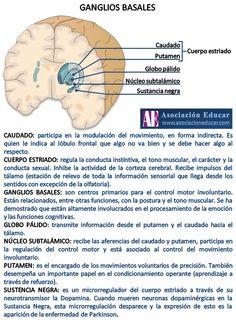 Infografía Neurociencias: Ganglios basales.  Material de uso libre, sólo se pide citar la fuente (Asociación Educar).  Más infografías: http://www.asociacioneducar.com/ilustraciones  Asociación Educar Ciencias y Neurociencias aplicadas al Desarrollo Humano www.asociacioneducar.com